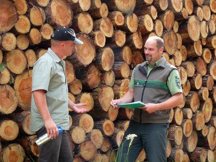 Holzverkauf Sachsende